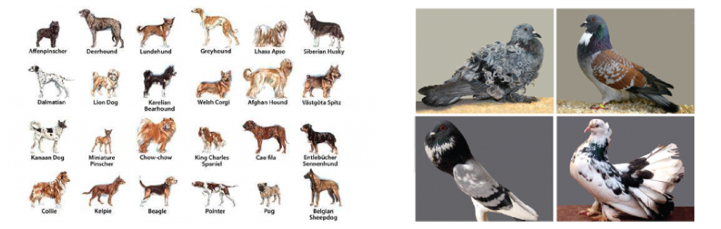 dogs-and-pigeons