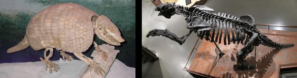 Fossils of Mammals